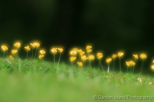 Little Yellow Fowers_9673