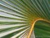 Palm_9332