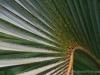 Palm 9347