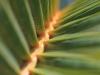 Palm Leaf_9364