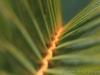 Palm_9367