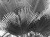 Palms_9420