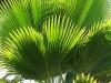 Palm_9421