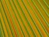 Palm Leaf_9473