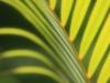 Palm_9474