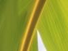 Banana Leaf_9543
