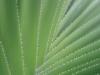 Cactus_9663_1