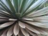 Cactus_9756_1