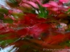 Rainbow leaves_9874_1
