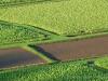 Taro Field 1283_1