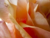 flowers-1538-3
