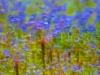Flowers_6989