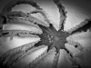 Spider Leaf_9541