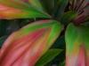 Ti Leaves-2462