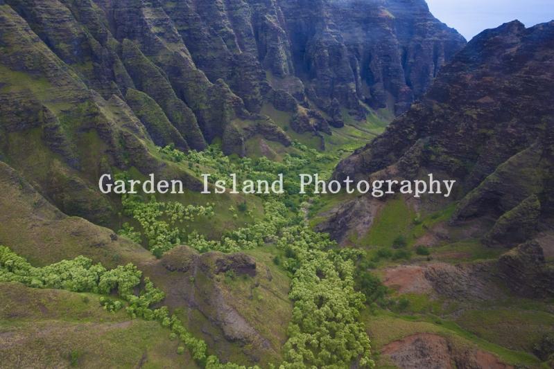 Kauai Valley -6728