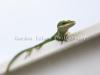 chameleon-0280