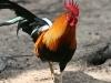 County-bird-1164