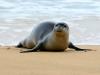 Monk Seal-8798