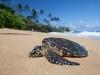 Sea Turtle-5716
