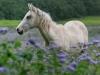 Unicorn-in-waiting-4104