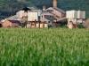 Koloa-Sugar-Mill-4246
