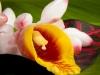 Flower-2218-3