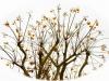 flowers-3201