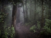 Kauai Trail -0566