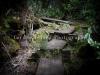Alakai Swamp Hike-3642