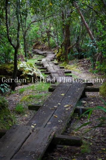 Alakai Swamp Hike -3703
