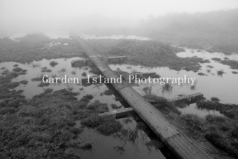 Alakai Swamp Hike -3729