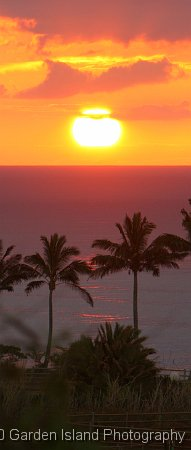Purple Hues and Palms 5128