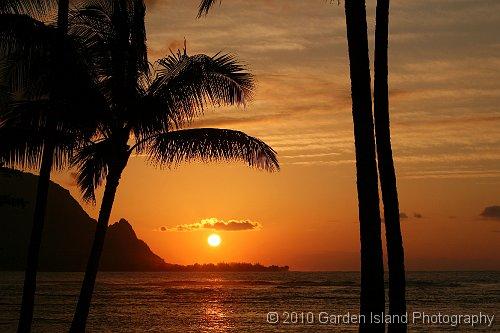 Swaying Palms 2365