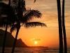 Swaying Palms 2370_1